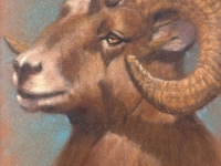 Big Horn Sheep, Pastel, 11x9