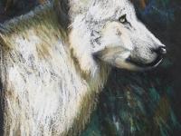 White Wolf, Pastel, 12x9